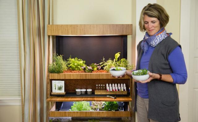 智能菜园子启动 在家就能享受绿色食材