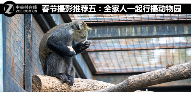 春节摄影推荐五:全家人一起行摄动物园