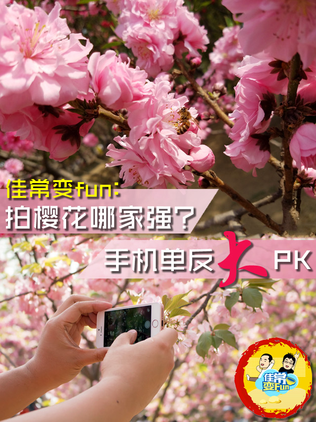 佳常变fun:拍樱花哪家强?手机单反大PK