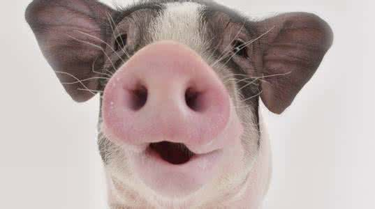 编辑部的日常:赶猪棒的测评可能要延期了