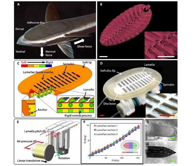 吸盘鱼仿生机器人 海洋生物研究现曙光