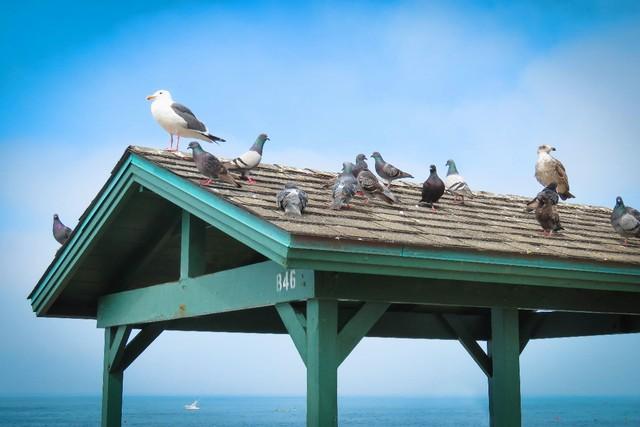 五一好春光,打鸟有技巧