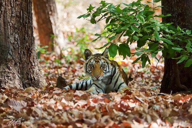 索尼黑卡RX10III印度博物摄影之旅