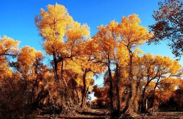 赏花赏月赏秋香 假日值得看的最美秋景